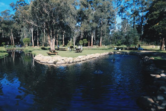 Buxton, Australia: There are a variety of ponds with different size fish.