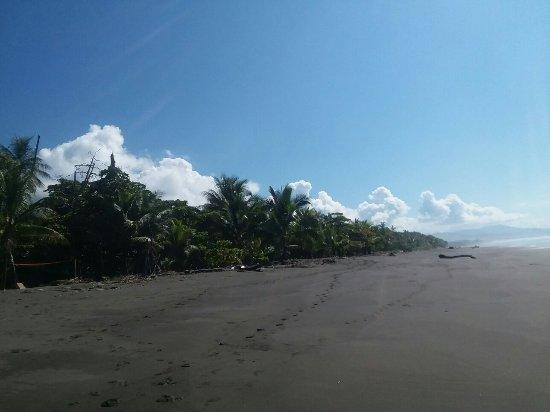 Playa Matapalo, Costa Rica: 20171206_091015_large.jpg