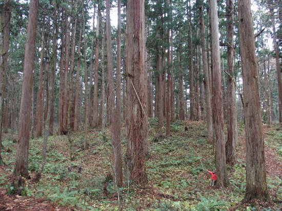 Kamiouchisawa Nature Observation Training Forest