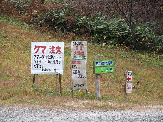 Kamikoani-mura, اليابان: クマに注意