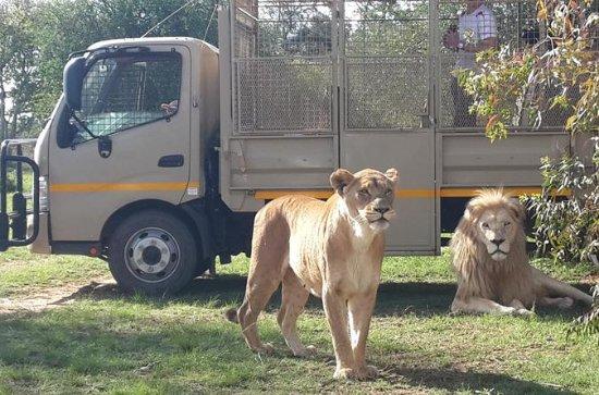 Half Day Lion Park tour