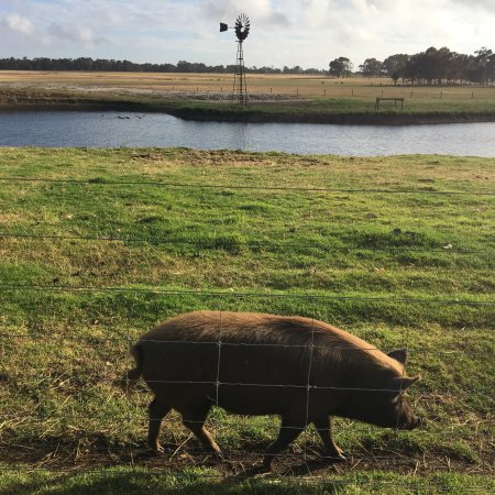 Taunton Farm Holiday Park: photo1.jpg