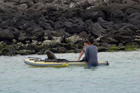 Puerto Baquerizo Moreno, Ecuador: Sea lions SUP. Isla Lobos