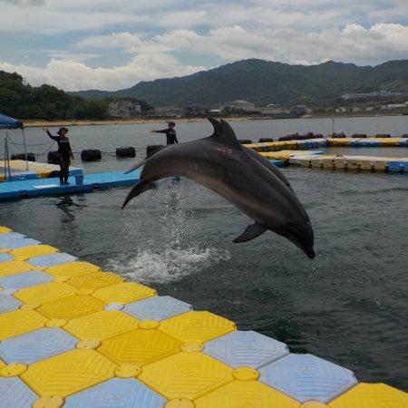 Japan Dolphin Center