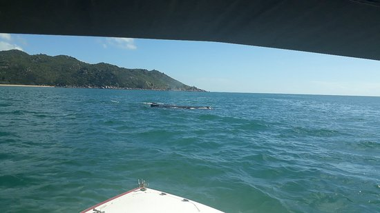 Isla Magnetic, Australia: Horseshoe Bay Water Sports