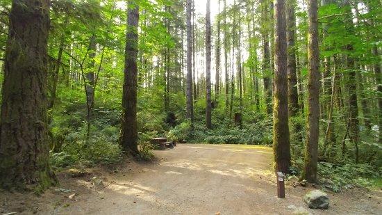 Campbell River, Καναδάς: Elk Falls Provincial Park (Quinsam Campground)