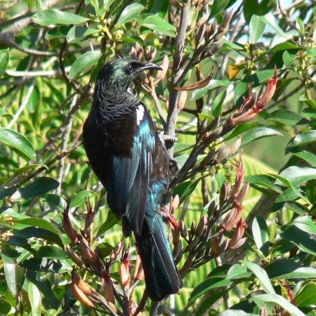 Northcote, New Zealand: photo0.jpg