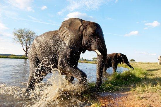 Camp Jabulani Elephant Experience