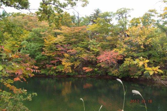 Shirakami Sanchi: 白神十二湖の大池