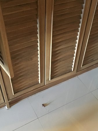 """Royal Cliff Beach Terrace: Cockroach that fell from ceiling next to the closet in """"Honeymoon Suite"""""""