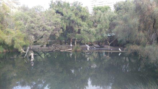 Perth Zoo : Pond