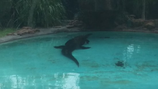 Perth Zoo : Croc