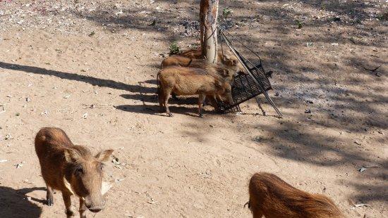 Mabula Private Game Reserve 이미지