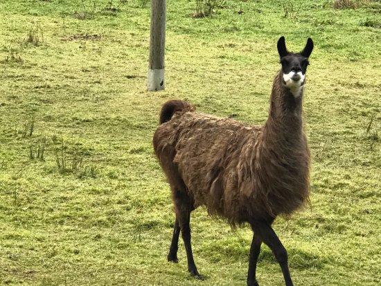 Dunkeld, UK: Fauna
