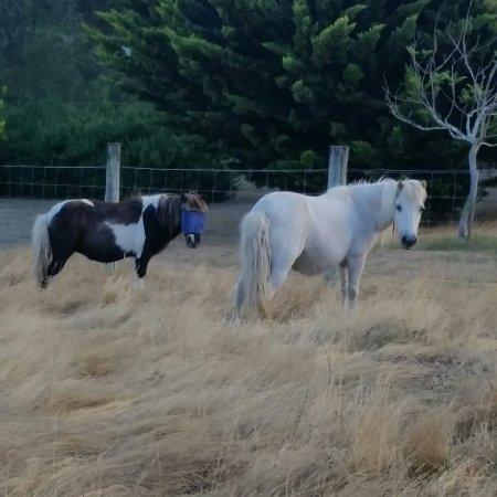 Pemberton, Australia: 20171209_173405_large.jpg