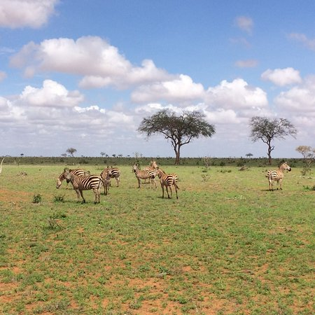 Tsavo National Park East, Κένυα: photo7.jpg