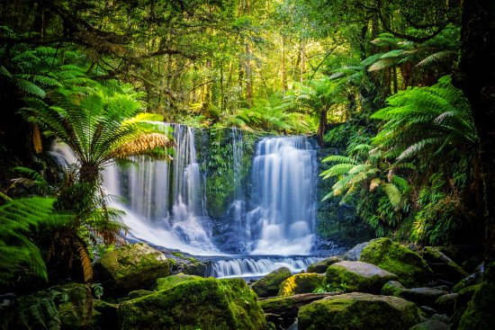 Campania, Australia: Day Tour - Falls & Devils - Discover Tasmania's nature at Mt. Field National Park and Bonorong.