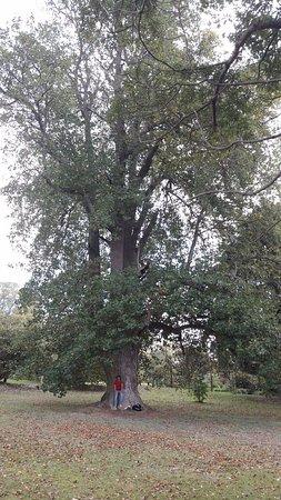 Palheiro Gardens: Uma das belas árvores do Palheiros!