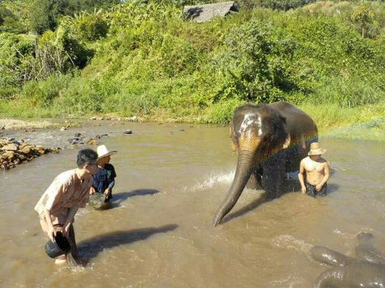 Maeklang Elephant Conservation Community