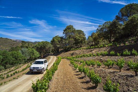 Cornudella de Montsant, Spain: Ruta 4x4 entre viñedos