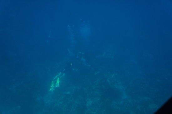 Les Anses d'Arlet, Martinica: Tijdens onze rit zijn we enkele duikers gepasseerd.