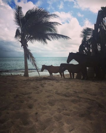 Coco Loco Guesthouse: Sun Bay Beach horses