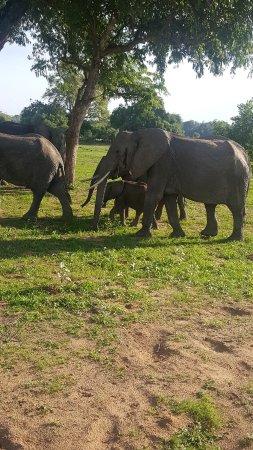 South Luangwa National Park Photo