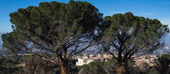 Monte Porzio Catone, Italia: Tuscolo