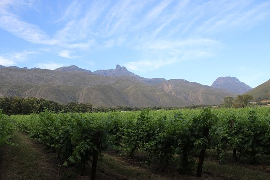 Ladismith, Zuid-Afrika: Vineyards at Oaksrest
