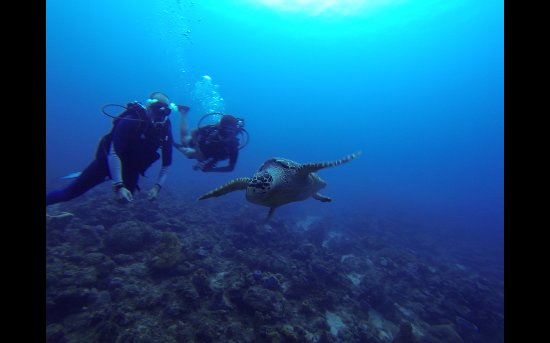 Le Gosier, Guadeloupe: Plongee reserve cousteau