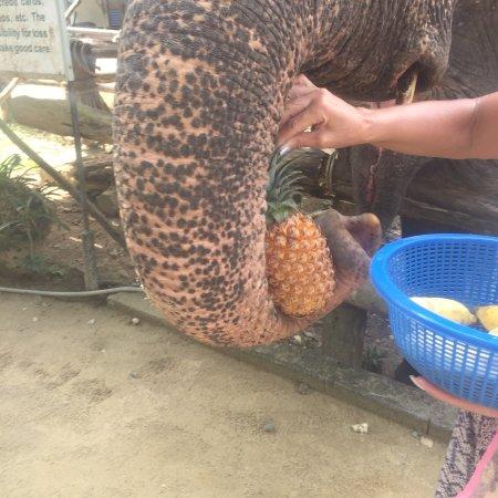 Phang Nga, Tailândia: photo3.jpg