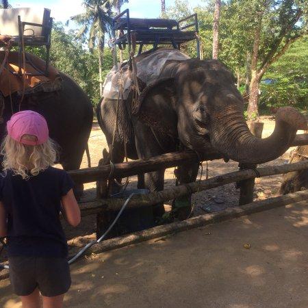 Phang Nga, Tailândia: photo5.jpg