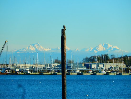 Oak Harbor, WA: one of the many birds