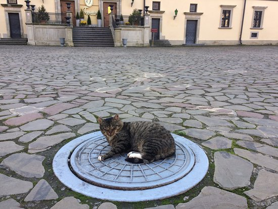 Nesvizh, Białoruś: замковый кот