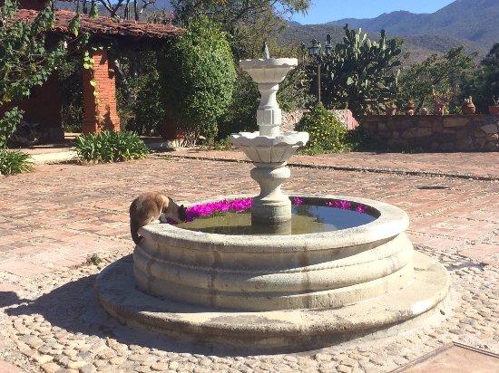 San Andres Huayapam, Mexico: Gato