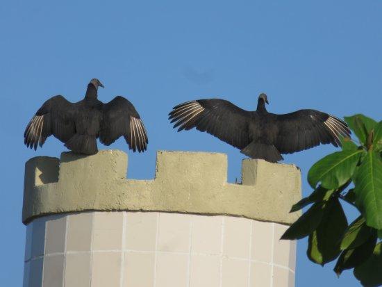 Villablanca Garden Beach Hotel: Vultures perched on tower at Villablanca