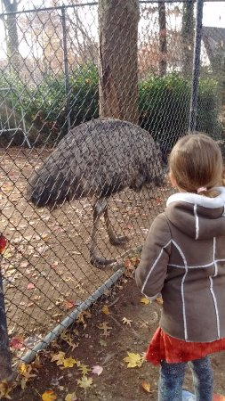 Staten Island Zoo: Emu & Little Z (Staten Island - Dec.2017)