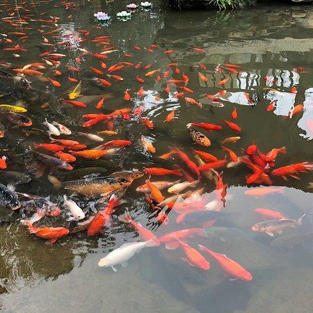 Leshan, China: photo8.jpg