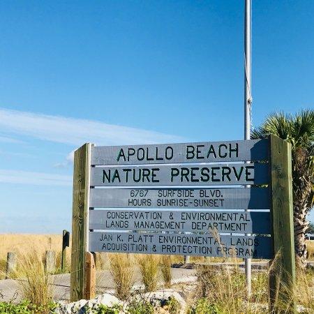 Dog Friendly Restaurants Apollo Beach Fl