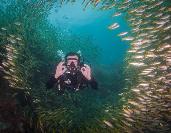Flip Flop Divers