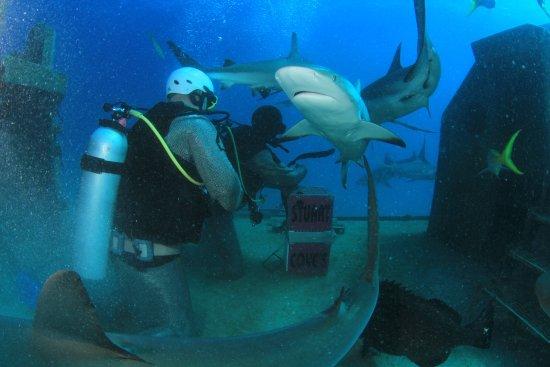 Stuart Cove's Dive Bahamas: Feeding the sharks