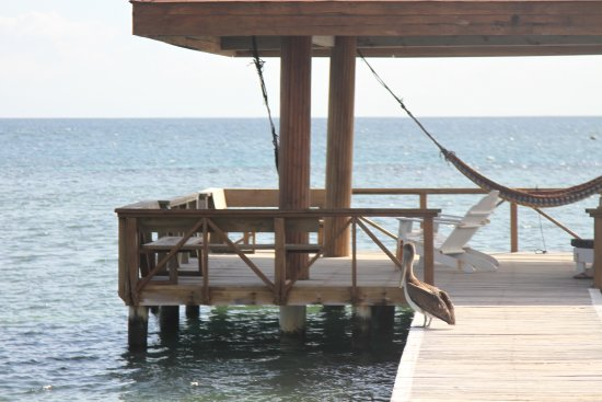 CoCo View Resort: Hammock out in the bay nice place to hang out