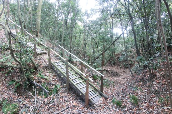 Yokkaichi, Jepang: 歩きにくい場所には木橋が架けられている