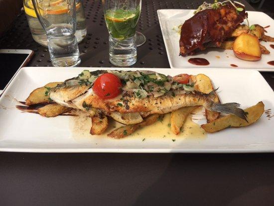 Dorada fish