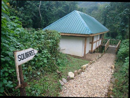 Bwindi Impenetrable National Park, Uganda: DSC_0549_large.jpg