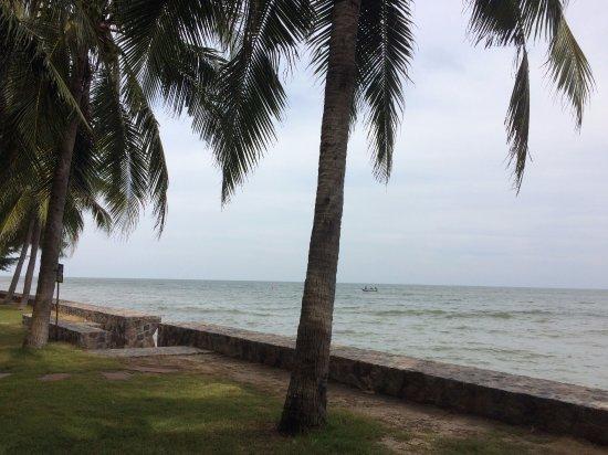 Grand Pacific Sovereign Resort & Spa: grasgazon aan het strand onder de palmbomen