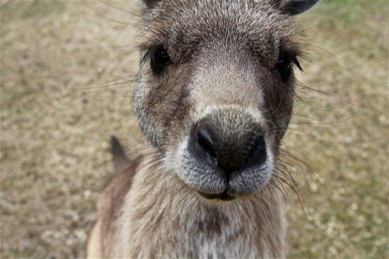 Bicheno, Australia: Very up close and personal