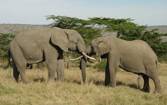 Diani Beach, Kenya: elephants of Amboseli
