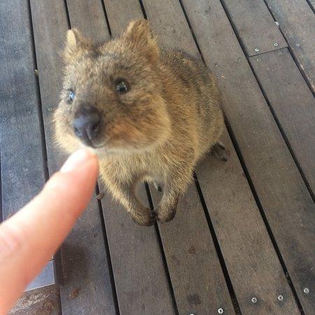Rottnest Island, Australia: photo1.jpg