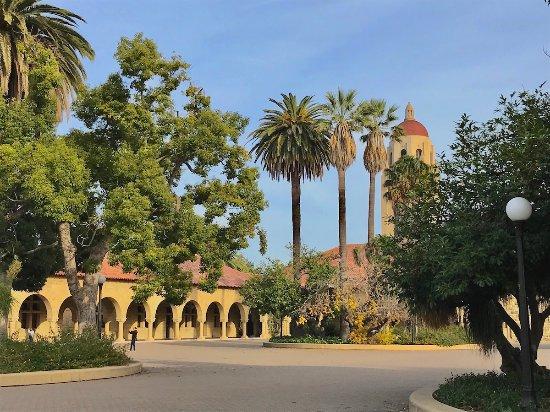 พาโลอัลโต, แคลิฟอร์เนีย: Campus de Stanford University
